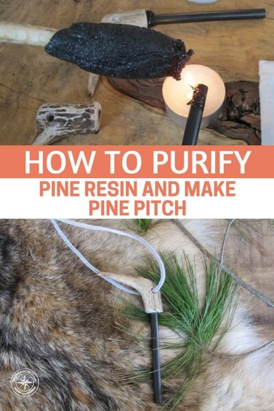 How to Purify Pine Resin and Make Pine Pitch — Purifying pine resin is the key to make some great wilderness glue also known as pine pitch. Make some today and get some classic wilderness skills down!