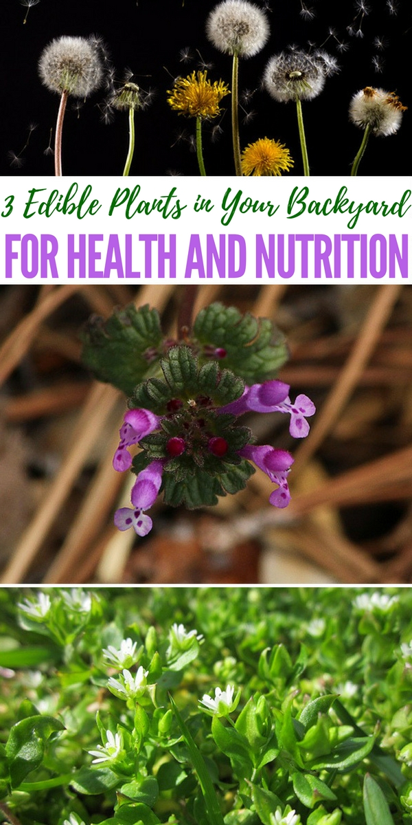 3 Edible Plants in Your Backyard for Health and Nutrition - list