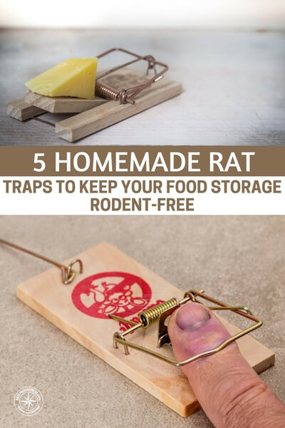 5 Homemade Rat Traps to Keep Your Food Storage Rodent-Free — A rat in the pantry is a quick way to ruin your day. They can gnaw through containers like they arent even there and make short work of all your hard work.
