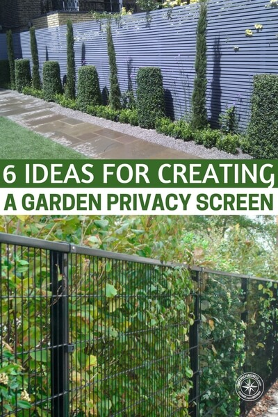 6 Ideas For Creating A Garden Privacy Screen   The Added Bonus To  Installing Any Of ...
