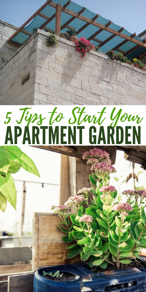 5 Tips to Start Your Apartment Garden — What I like most about this article is that it addresses an issue that many frightened preppers deal with. I am talking about those stuck in condos or apartments that feel like they have no ability to grow their own food.