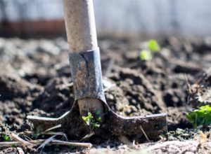 Organic Non-Manure Fertilizer Options - Whether it is the smell or the mental image that keeps them from it, there are numerous non-manure options you can use to keep your garden fertile and your plants lush and green.