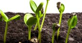 How To Improve Seed Germination - list