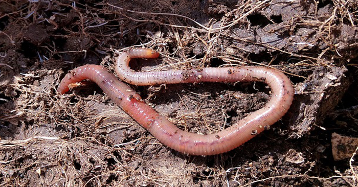 Make Compost with Worms - guide