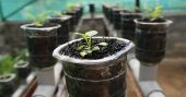 Start Growing Your Own Food Using Hydroponics - tips