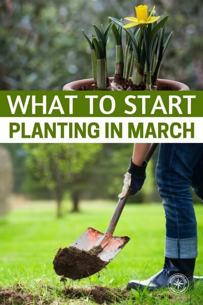 What To Start Planting In March - I get a lot of messages asking what you can plant in March, so here are some great tips to help you along and get an amazing spring garden you have always wanted! It's the perfect time to start working on your Spring gardening plans, even though Spring doesn't officially start until much later in the month.