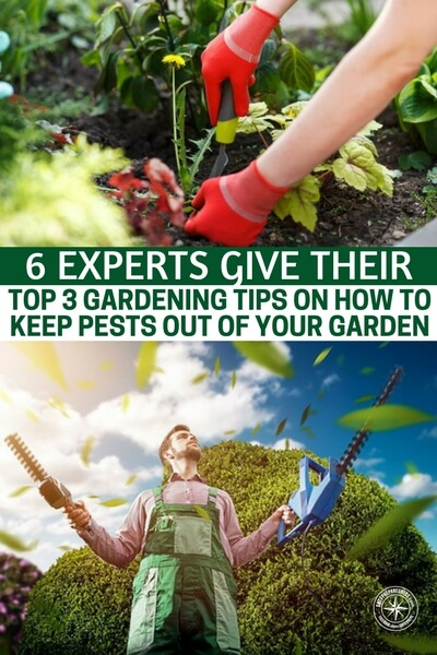 6 Experts Give Their Top 3 Gardening Tips on How to Keep Pests Out of Your Garden — Starting and maintaining a garden takes hard work, patience, and some basic awareness. Don't let garden pests ruin all that hard work, and your beautiful garden, by taking some preventive steps that are easy and effective.