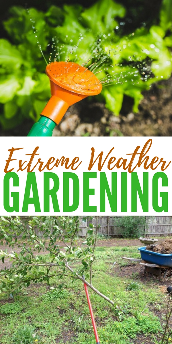 Extreme Weather Gardening - Last year my garden was totaled by extreme weather. It was well into May and my plants were looking great. This is a reality that we all must plan and plant for.