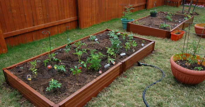 How To Build A Raised Bed Garden —I have never had success in the garden like that that in the raised bed. Having full control of the soil and the moisture in your garden is crucial and the raised bed just cannot be rivaled. In my own personal experience I saw a yield well over 100% when I stopped growing in the garden soil and began building raised beds.