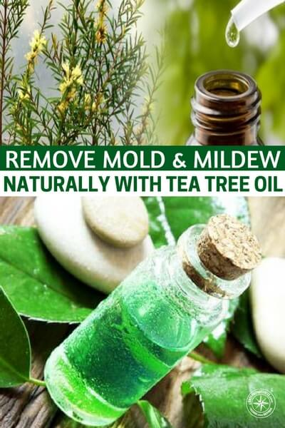 How To Remove Mold & Mildew NATURALLY With Tea Tree Oil — Tea tree oil is well known for its anti-bacterial and anti-fungal properties, but it is mainly used for natural health and beauty purposes; however, tea tree oil is also great for cleaning and it is very effective at removing mold and mildew