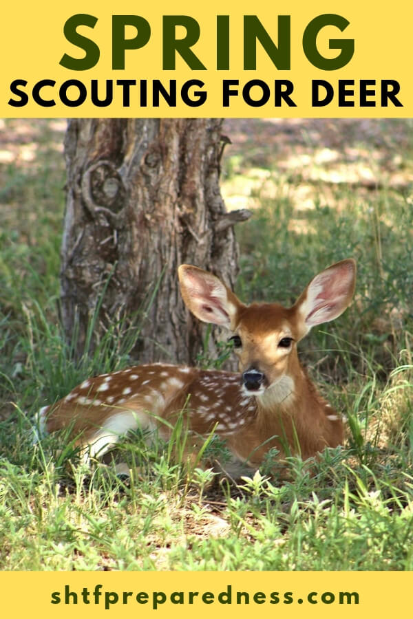 Spring Scouting for Deer — Spring time is one of the best times to get out! After a winter of hiding and shivering its time to get back to work. This is a short article and a great video on scouting for deer.