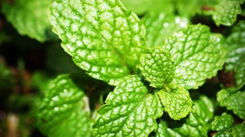 23 Medicinal Plants the Native Americans Used on a Daily Basis