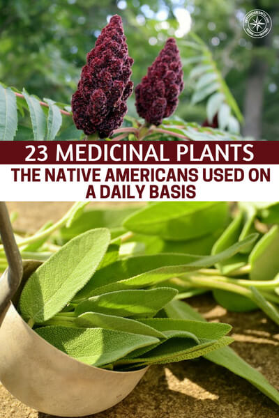 23 Medicinal Plants the Native Americans Used on a Daily Basis - There is never enough information when it comes to the way that a plant can heal you. You must first understand that the food we eat heals us as well as the herbs and wild plants we chop, simmer and mix into healing salves and various other medicines.