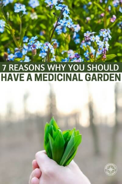 7 Reasons Why You Should Have a Medicinal Garden -- There are more people growing their own food now than in recent years. This is great news for American health in general.