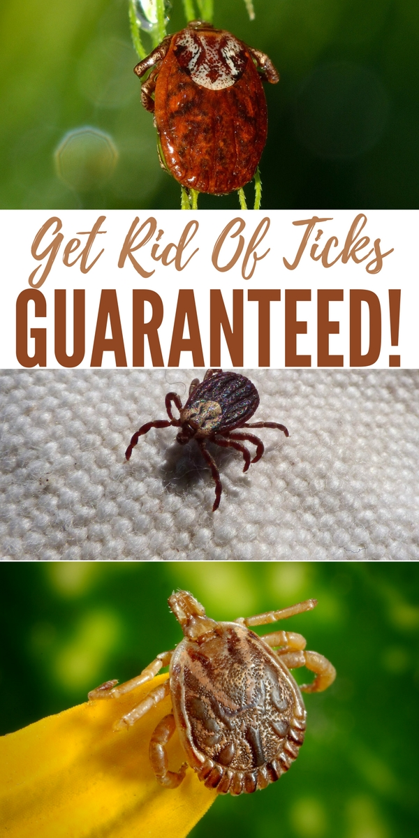 how to get rid of wood ticks