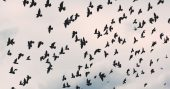 Harvesting Wild Birds for Food after the SHTF - This article takes a look at the various types of birds that can be harvested. It also takes an interesting look at laws protecting certain birds. I really like this idea because we don't know which laws will be enforced or how much of law will be enforced in a SHTF scenario. The author also talks about various methods for taking these wild birds in the field. Better to have something other than a bow and arrow for birds.