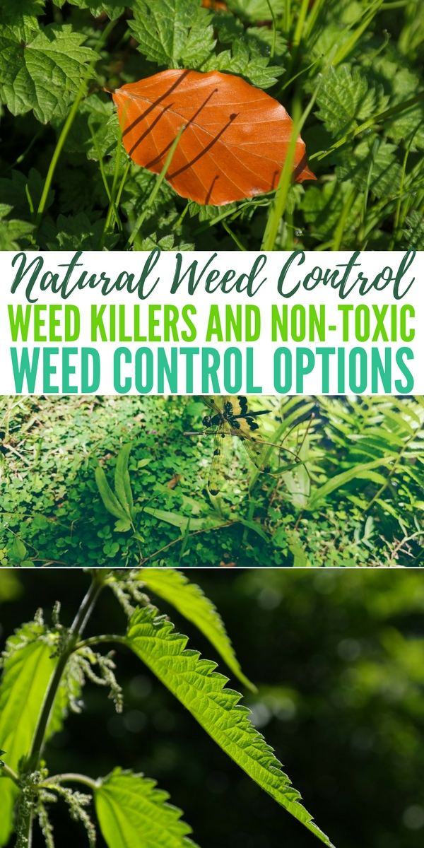 Natural Weed Control – Weed Killers and Non-Toxic Weed Control Options — Once the excitement of your sprouts is over you are hit with that familiar feeling. You see those terrible weeds starting to sprout as well.
