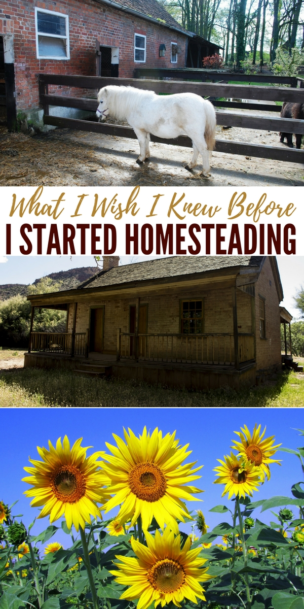 What i wish i knew before i started homesteading for How to start homesteading today