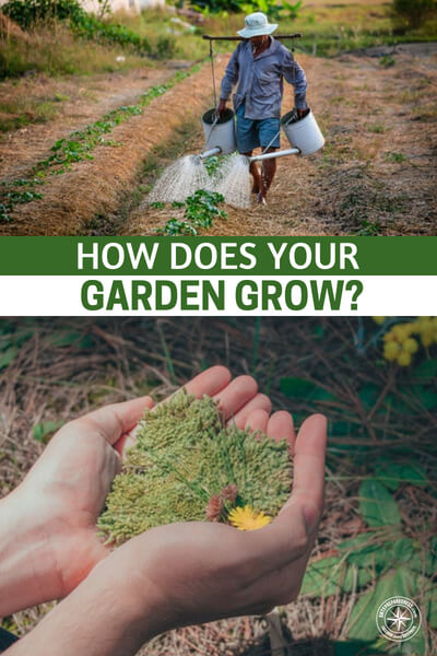 How Does Your Garden Grow? Sunlight, Water, and Some Technology - In theory, growing a garden seems like the easiest thing in the world to do. Just sow some seeds, make sure the seedlings get plenty of water and sunlight, and in a few months (or less) you'll have a bountiful harvest of fresh produce.