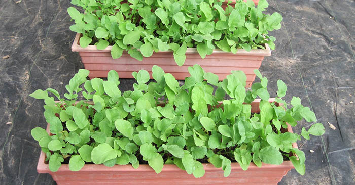 The 15 Best Container Vegetables To Grow - Once done with veggies you can start your own fruit garden as well.