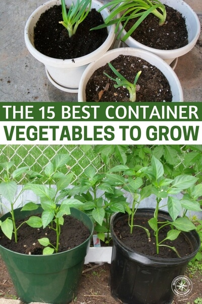 Container Vegetables 15 best container vegetables to grow ping the 15 best container vegetables to grow once done with veggies you can start your workwithnaturefo
