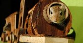 5 Tips to Keep Your Homestead Rodent Free - This is a great article on handling these pests on your own. There will be no Orkin man in a SHTF pest control will be your responsibility. The best advice I can give you on pest control is to mind their access to food, water and harborage you will keep them at bay for the most part.