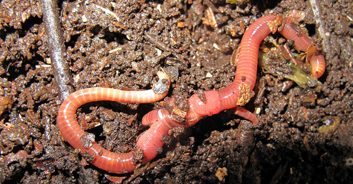 Worm Farming with John Moody - One of the most important parts of worm farming is to get those great worm castings that are like garden steroids. They are gold for your soil. Of course, you have to have a method to separate out the castings from the rest of your worms and their living environment.