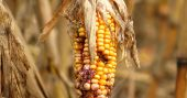 Experts Warn: Crop Failures Could Cause Apocalyptic Scenarios - The author also offers up some serious insight on how dire the situation could get. To me this is just another reminder of how important it is that we stay prepared. We must expand our growing areas each year and become more proficient in how we preserve and conserve food.