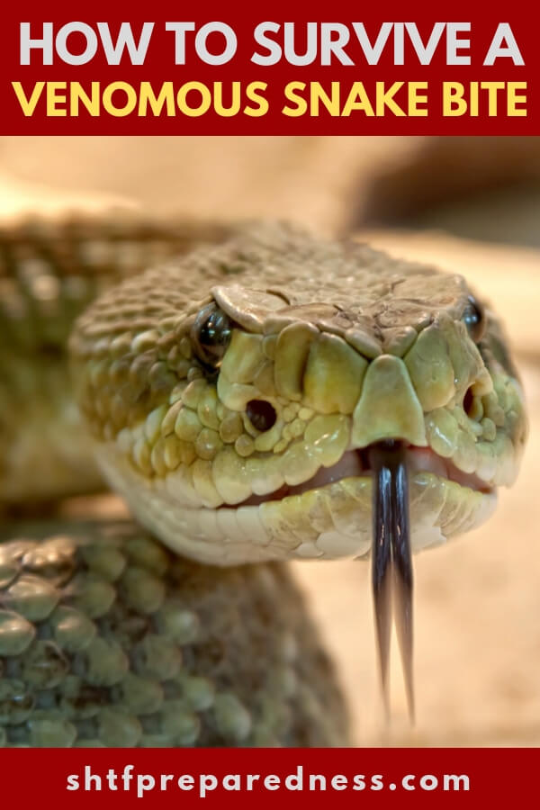 How to Survive a Venomous Snake Bite - This article talks about how to ID the snake the bites you and what do when the venom is coursing through your veins. Though that venom may not be deadly it could hinder you in such a way that wilderness survival could become an impossibility.