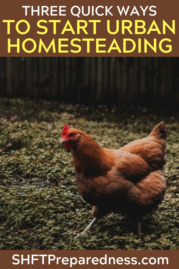 "Right now you are sitting in a normal home and thinking to yourself, ""how can I get better?"" We always want to get better and most who are reading this are just looking to be a little self sufficient. You realize that your home is just a few steps away from being your own urban homestead."