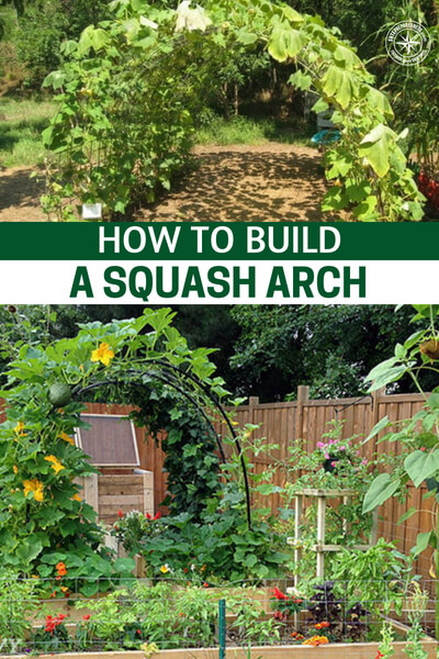 How To Build a Squash Arch - You can build many of these that provide a beautiful garden structures that produces amazing squash and won't break the bank! I will be doing this project this year as I am growing butternut squash for the first time.
