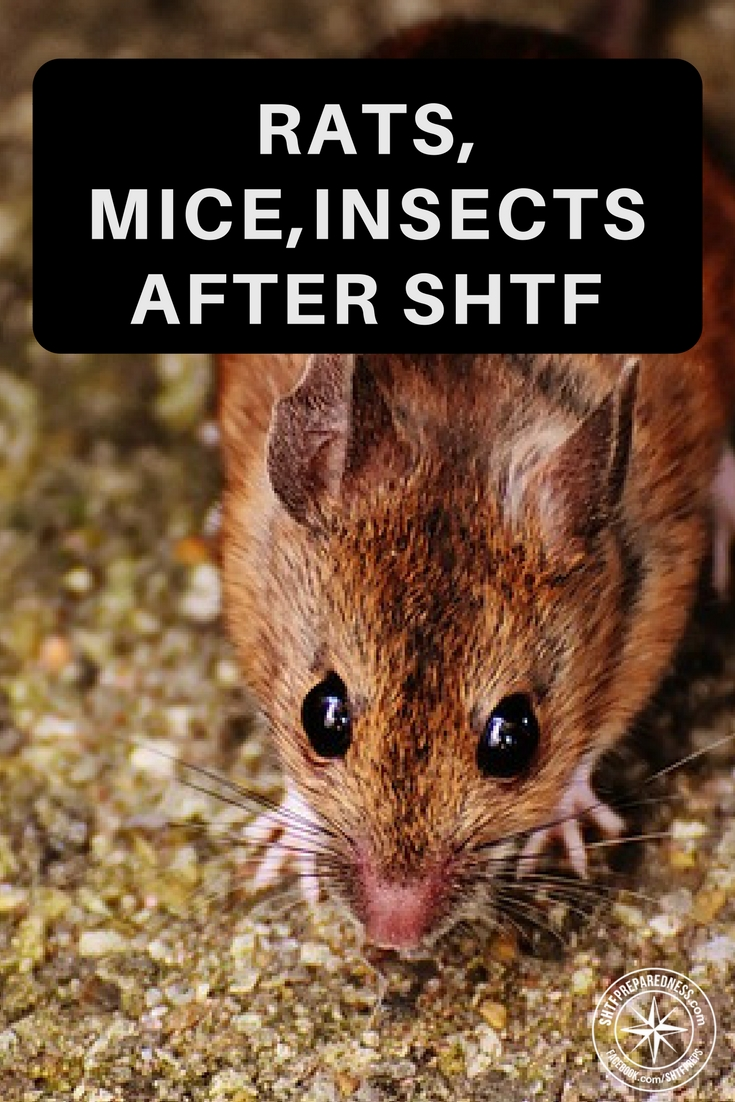 Rats – Mice – Insects After SHTF – What To Do About It - In a survival situation you better have some answers for how you plant to deal with these creatures. There are many ways to deal with pests in our society today but in a world of mess and waste things could get much more complicated.