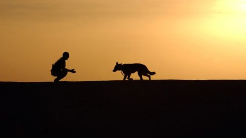 Backpacking with Dogs: The Complete Guide