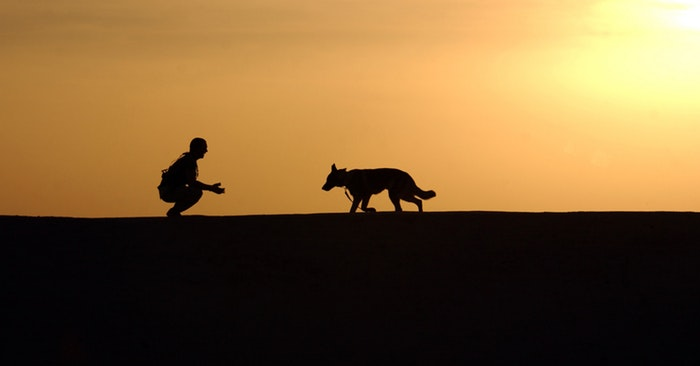 Backpacking with Dogs: The Complete Guide - This is a great guide about backpacking with dogs. You will find information in this article about properly caring for and handling a dog in the wild. Our dogs are our responsibility and it takes some planning to do it right. Read on and get prepared.