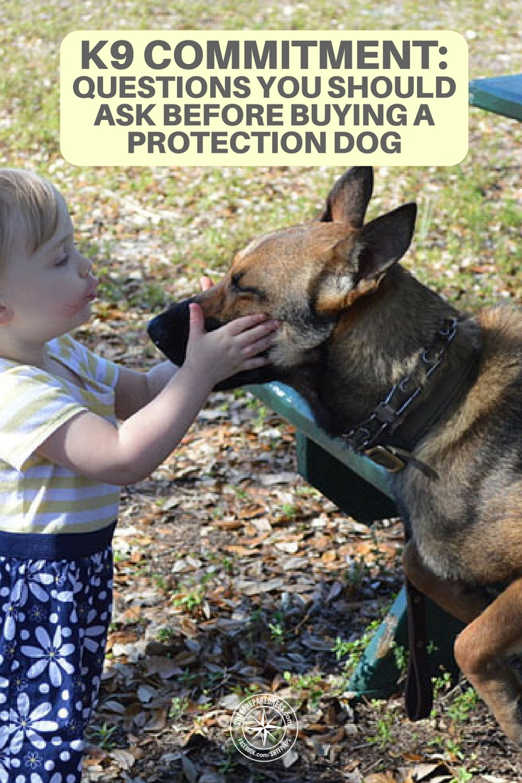 K9 Commitment: Questions You Should Ask Before Buying a Protection Dog - You own the animal and therefore you are responsible for its well being. This is a very touchy subject for me because I know how much work dogs can be if you want them to have a rewarding life.