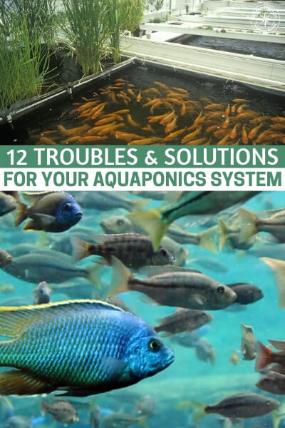 12 Troubles & Solutions For Your Aquaponics System - This is a great article about the things that can go wrong in an aquaponics system. This list will help you prepare for the challenges that go along with this type of a project.