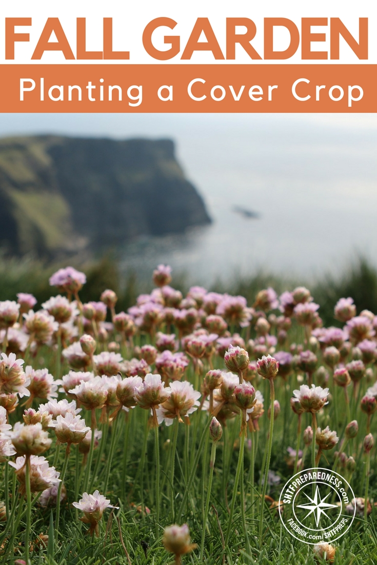 Plant a Fall Garden Cover Crop - This article taps a whole new train of thought and that is planting a cover crop in the fall. There are many different types of cover crops to plant in the fall and I have to say I am intrigued by a few different ones.