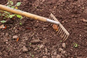 You will find that growing in clay soil is a death sentence for most plants, particularly in rainy seasons.