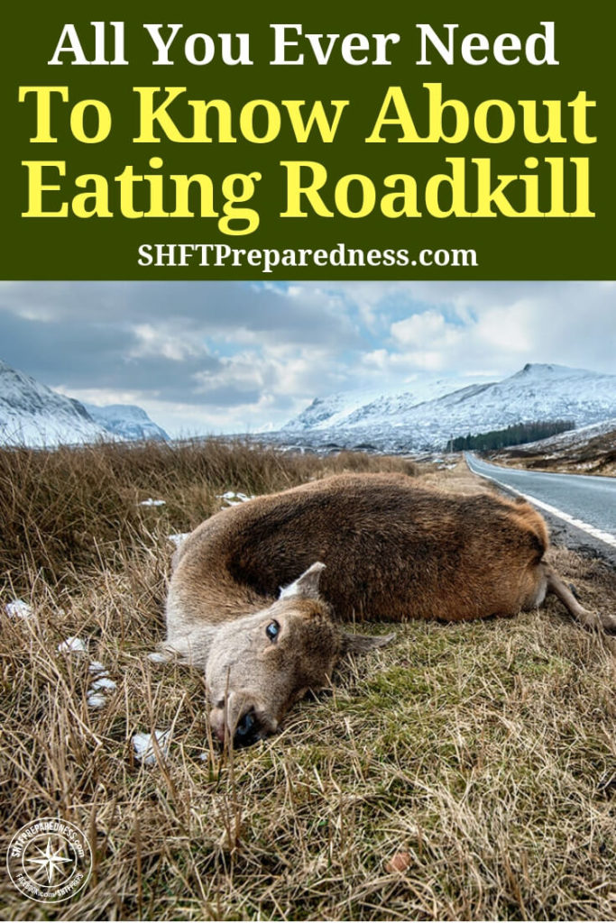 """All You Ever Need To Know About Eating Roadkill - Here are some animals that are considered """"safe"""" to eat:Badger, hedgehog, otter, rabbit, pheasant, fox, beaver, squirrel, deer (venison), moose, bear, raccoon, opossum, kangaroo, wallaby, possum, rabbit, etc. Rats that are roadkill I would give a wide berth. You will find out why in the original article. EWW."""