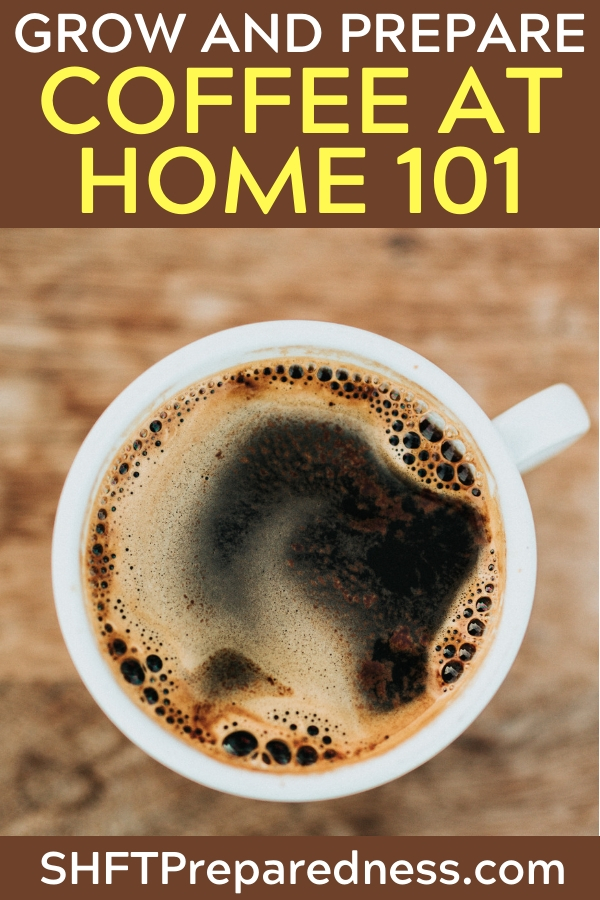 How To Grow And Prepare Coffee At Home 101 - Many of us don't even know that coffee can be grown right here, at home! This plant is actually quite easy to take care of and if you had guests over would be a very interesting plant top talk about.