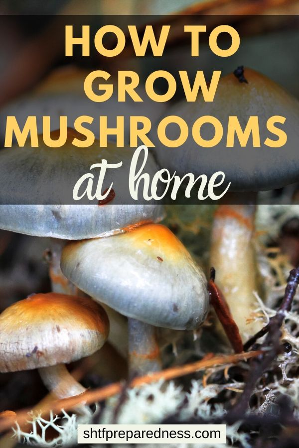 Ever wondered if you could grow mushrooms from a kit? Learn how to create your own mushroom kit for big savings, and then grow mushrooms at home. #mushroomkit #growmushrooms #survival #preparedness #homesteading #mushrooms