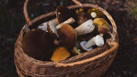 How To Grow Mushrooms At Home –  Fun And Nutritious!