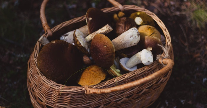 Basket filled with mushrooms