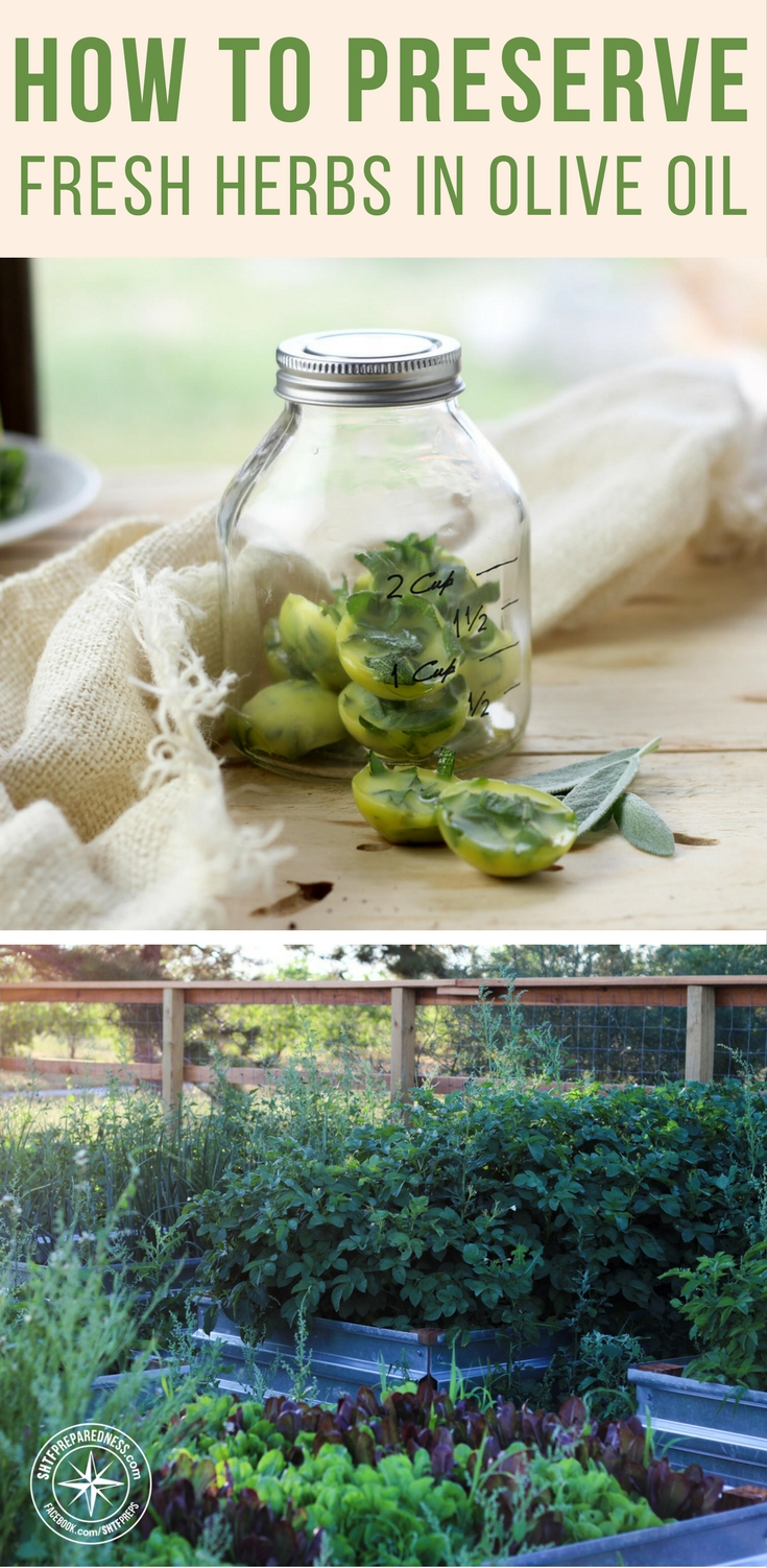 how to preserve fresh herbs in olive oil