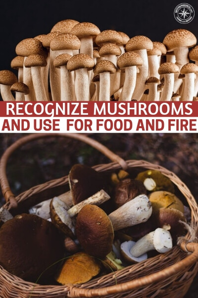 How To Recognize And Use Mushrooms For Food And Fire - The survival uses for mushrooms are many. Just as you should know your trees and your plants, get to know your mushrooms.