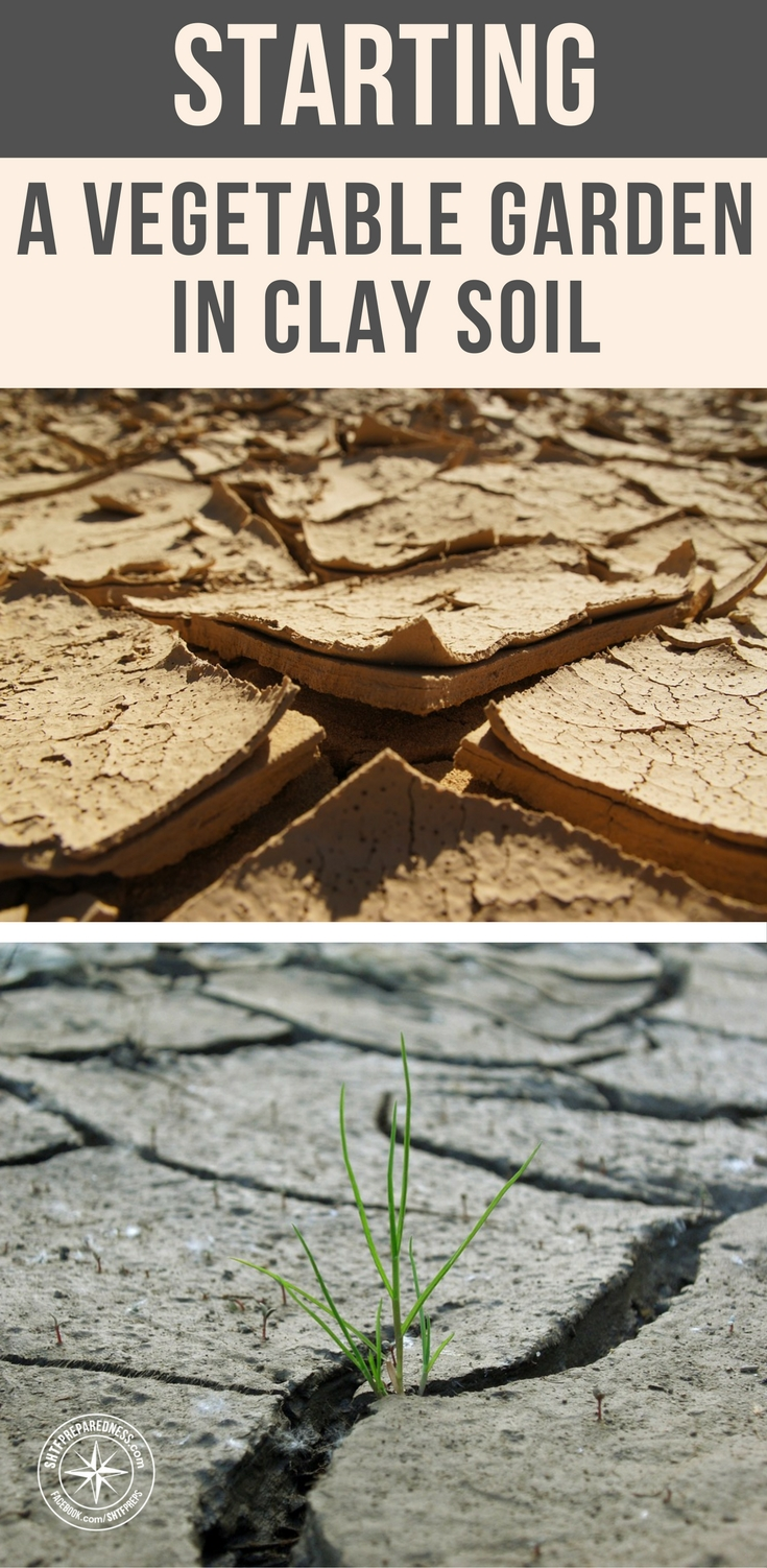 Starting a vegetable garden in clay soil for Starting a vegetable garden