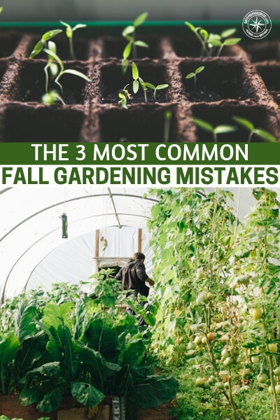 The 3 Most Common Fall Gardening Mistakes – And How To Avoid Them! - From a great author comes three mistakes most of us are making in the fall and how to rectify them. There is so much more to caring for your soil than you can possibly imagine.