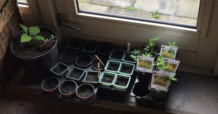 Urban Gardening: Growing Tomatoes, Vegetables and Flowers in an Apartment - The importance of growing food is overwhelming to me. I think it is the first step in finding your own independence.