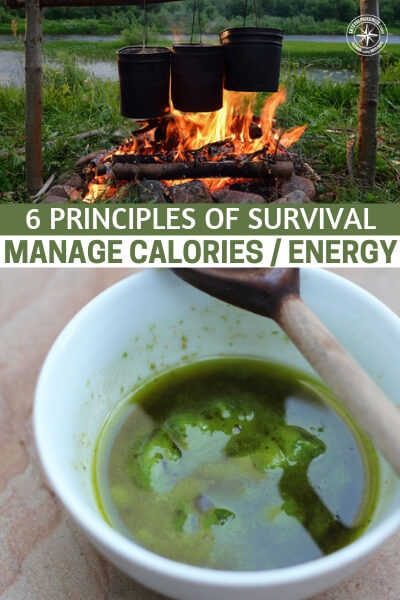 6 Principles of Survival – Manage Calories / Energy - Hopefully you have some skills and plans when it comes to a survival scenario that will affect you. This could be a natural disaster or even a series of unfortunate events unique to you.