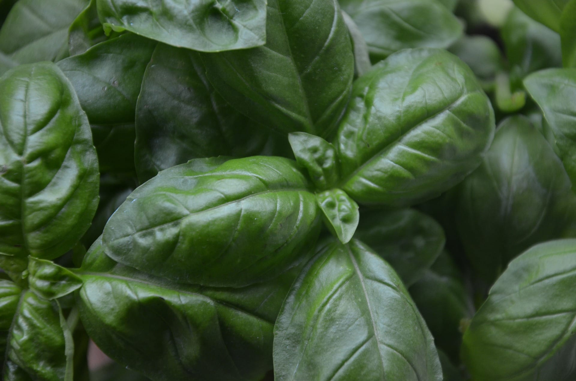 13 best herbs to grow indoors - Herbs that can be grown indoors ...